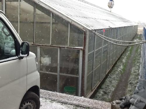 降り始めた雪