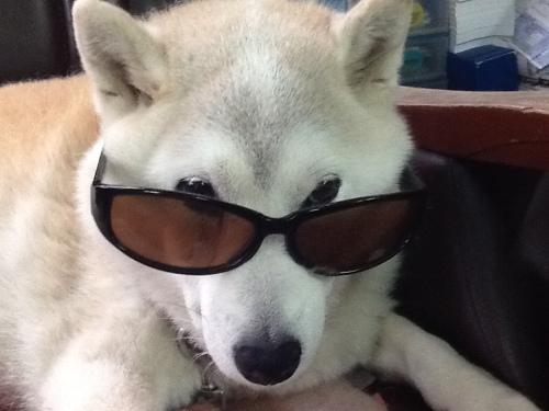 2016-05-02 看板犬チャコ